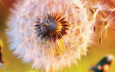 Is There a Solution to Your Allergy Riddle?